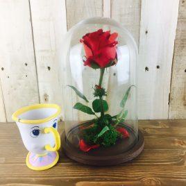 Rosa Encantada roja pequeña + taza chip + REGALO
