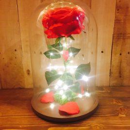 Rosa Encantada roja mediana con luz + REGALO