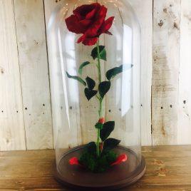 Rosa Encantada roja grande + REGALO