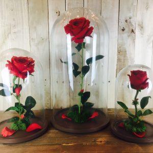 Rosa Encantada