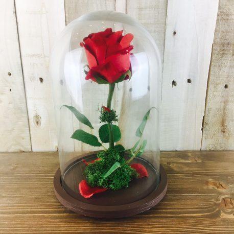 Rosa Encantada Bella y Bestia (5)