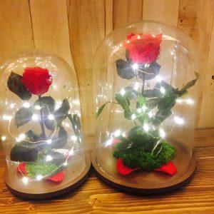 Rosa Encantada Liofilizada con luz