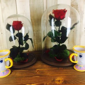 Rosa Encantada Liofilizada con taza Chip
