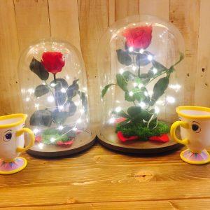 Rosa Encantada Liofilizada con luz y taza Chip